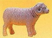 Schaf (Sheep)