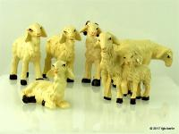 Schafe (Sheep)